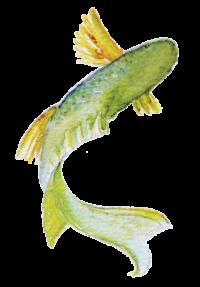 Fisch_Logo